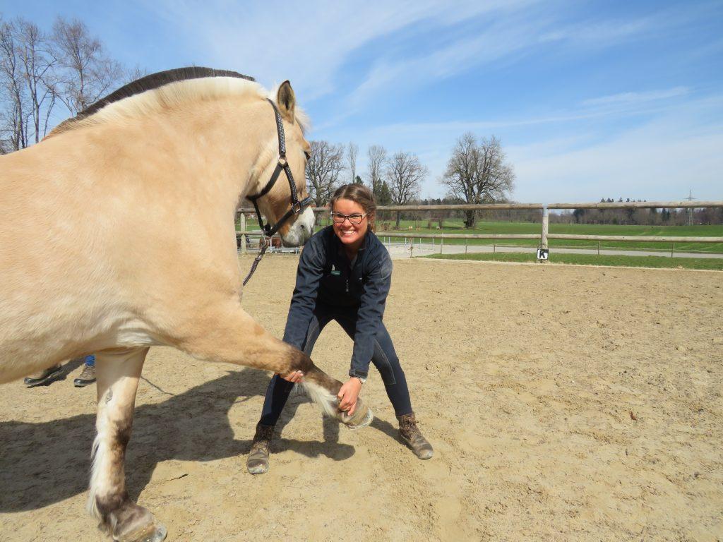 Pferd bekommt Krankengymnastik