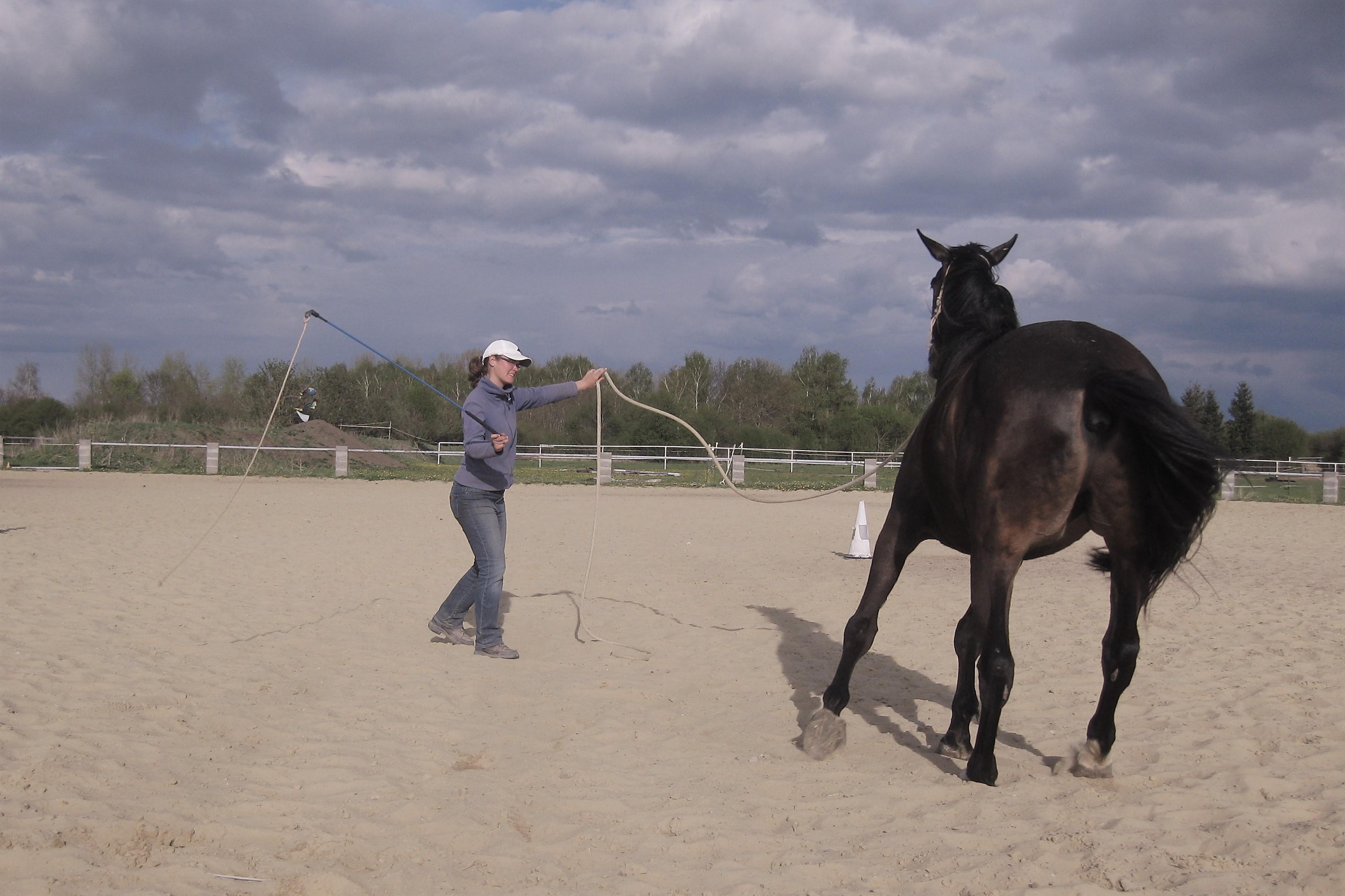 Bodenarbeitstraining - Natural Horsemanship