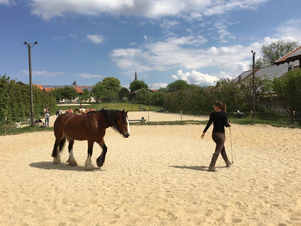 Pferd folgt einer Person freiwillig