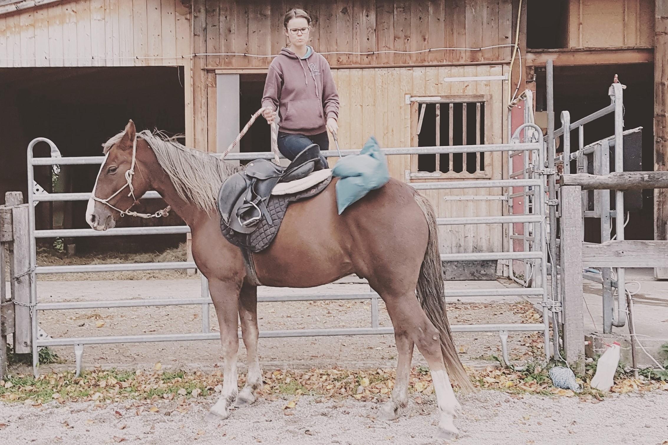 Gelassenheitstraining nach Natural Horsemanship