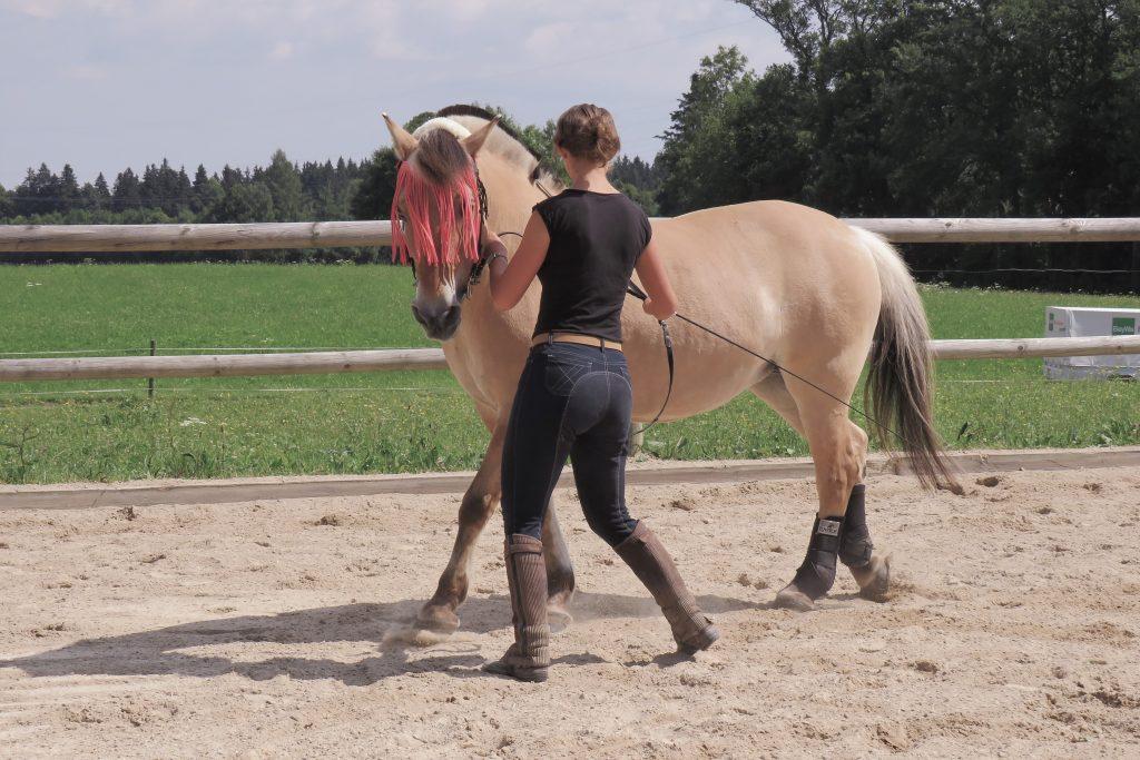 Schulterherein üben - Pferdephysiologie