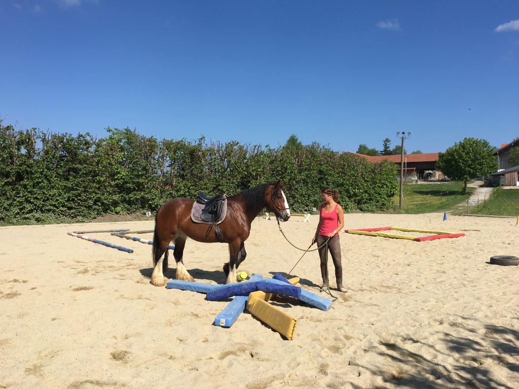 Pferd soll ohne Angst über Hindernisse am Boden steigen