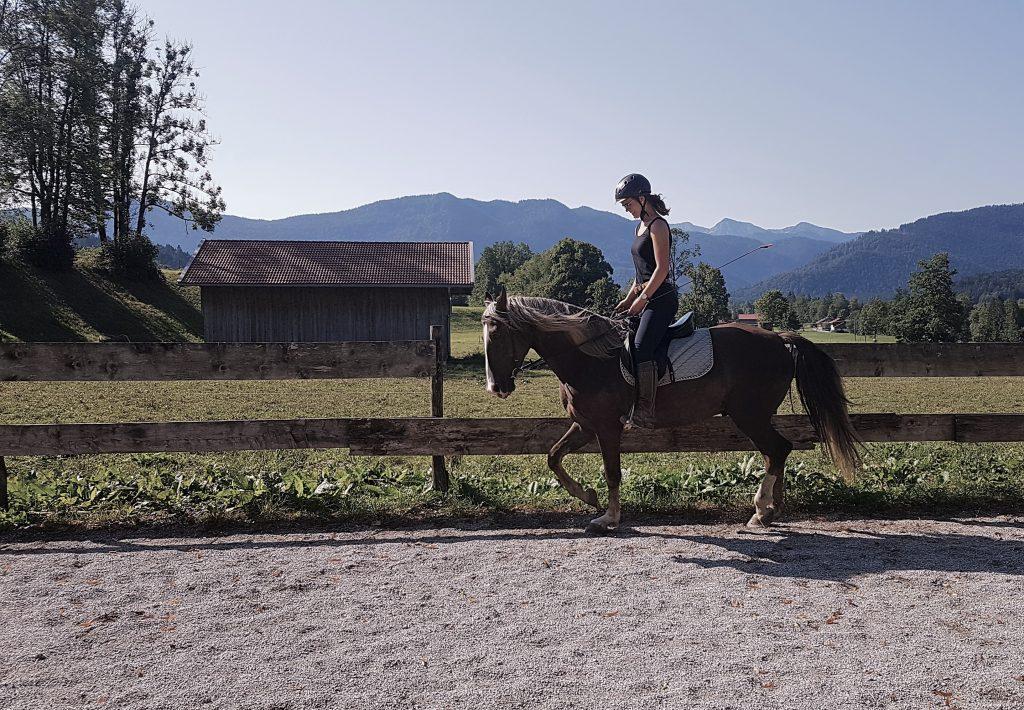 Pferd trabt entspannt und in Ahnlehnung