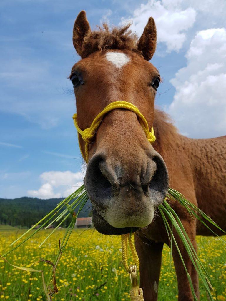 Junges Pferd schonend anreiten