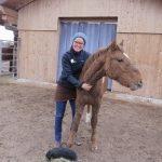 Junges Pferd in Ausbildung